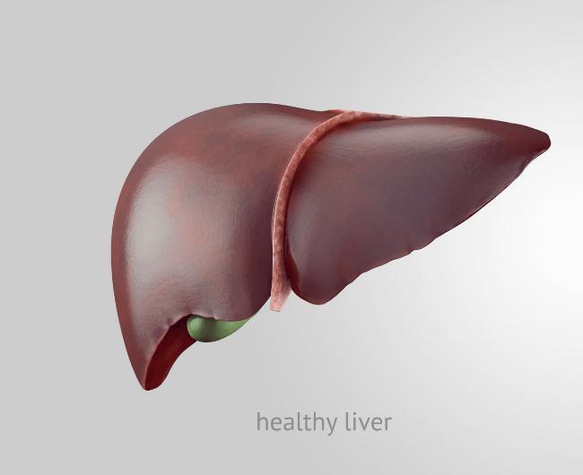healthy_liver_cirrhosis